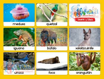 Loteria-animales2Loteria-animales2